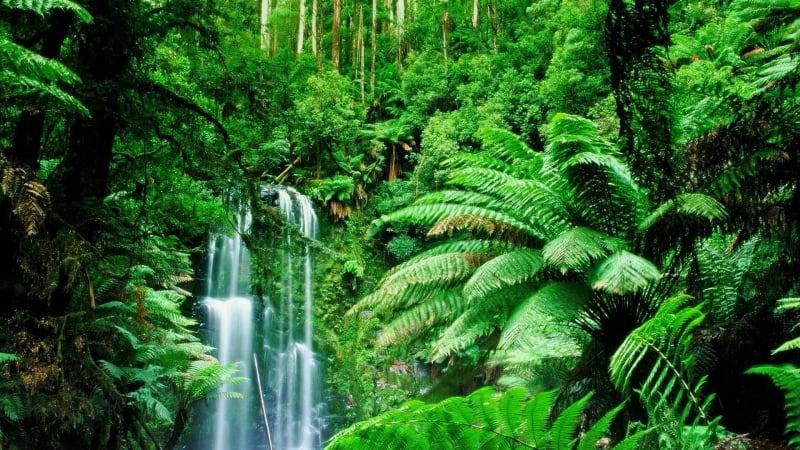 America Easy Amazonia 2